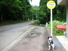 ここで待ってたら猫バス来るねんで。