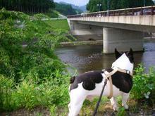 あの向こうの橋の下辺りやで〜。