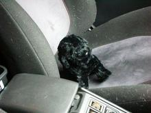 くっ、車にちょこんと乗ってるやん!