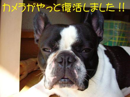 ぬ〜ぼ〜〜〜・・・岩尾でぇ〜〜〜す・・・