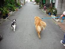 やっとお散歩行く気になってくれたわぁ。