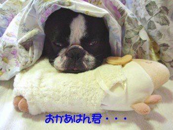 時にはボクのお気に入りのひつっちゃんの枕で・・・