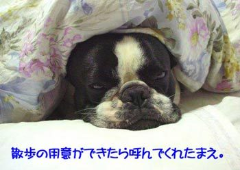 時にはおとうはんの枕を借りて・・・